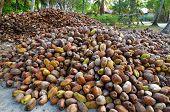 Big Pile Of The Cocos, Seychelles Island, La Digue poster