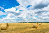 Dry Rural Field With Hay Stacks. Dry Rural Field With Hay Stacks. poster
