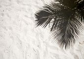 Palm Trees Cast Shadows On The Smooth Golden Sand Of A Remote Tropical Island Beach In Dominican Rep poster