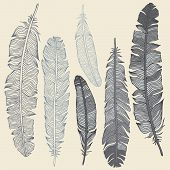 foto of feathers  - Vintage Feather vector set - JPG