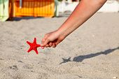 A Person Holding A Red Sea Star(starfish) In A Hand On The Beach With Sandy Background At Sunny Day. poster