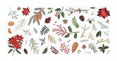 Winter Christmas Plants Textured Illustrations Set. Poinsettia, Spruce, Pine, Cedar, Mistletoe And O poster
