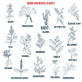 Best Herbs For Mental Clarity. Hand Drawn Vector Set Of Medicinal Plants poster