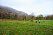 Herd Of Goats And Sheep Grazing In The Mountain Alpine Village. A Small Herd Of Goats Feeding At The poster