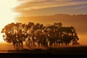 image of ceres  - landscape with blue gum trees and montains in the background - JPG