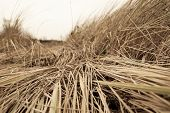 Texture Of Wilted Grass. Dry Grass Background. Grass Texture In Black And White Tone. Abstract Natur poster