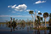 stock photo of marshlands  - Flat glassy waters of a Florida marshland reflect the palm trees and clouds on a sunny springtime day