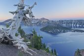 picture of pacific rim  - Landscape at dawn of Crater Lake National Park with conifers Wizard Island and crater rim Oregon USA - JPG