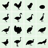 stock photo of rooster  - Set of poultry icons on green background - JPG