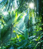 stock photo of humidity  - jungle in Vietnam - JPG