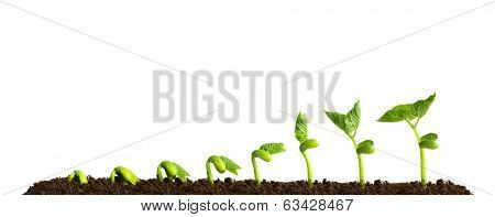 Growing plant in soil isolated on white background. poster