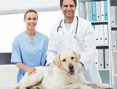 picture of working animal  - Portrait of confidence veterinarians with dog in clinic - JPG
