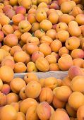 Apricots on sale as summer fruit