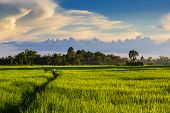 image of pesticide  - a man were spraying pesticides on the plant with landscape shot a beautiful sky - JPG