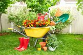 pic of wheelbarrow  - Wheelbarrow with shovel and rake in a beautiful garden - JPG
