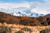 image of darwin  - Autumn in Patagonia - JPG