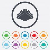 picture of conch  - Sea shell sign icon - JPG