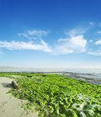 stock photo of green algae  - green seaweeds by the shore in Alghero - JPG