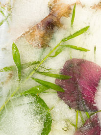 picture of bubble sheet  - unusual creative abstract pink flower and green thin leaves frozen in the ice and a lot of bubbles - JPG