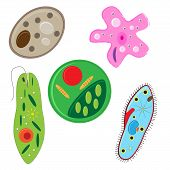 pic of amoeba  - vector illustration of unicellulars schemes set - JPG