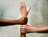 picture of racial diversity  - black African American and Caucasian hands holding together white skin arm in world unity and racial love and understanding in tolerance and races diversity cooperation concept - JPG
