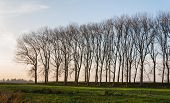 image of dike  - Row tall and bare trees on a Dutch dike - JPG