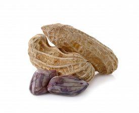 picture of ground nut  - peanut nut goober ground - JPG