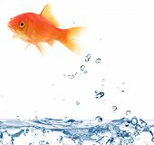 picture of aerobatics  - Goldfish jumping out of the water isolated on white - JPG