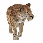 stock photo of saber-toothed  - 3D digital render of a big cat sabertooth isolated on white background - JPG