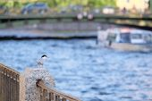 pic of sankt-peterburg  - Bird sits on a parapet on a river embankment - JPG