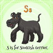 stock photo of scottish terrier  - Flashcard of a letter S with a picture of of black scottish terrier	 - JPG