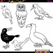 picture of nightingale  - Coloring Book Cartoon Illustration of Funny Birds Characters Set - JPG