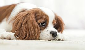 stock photo of sad  - sad pure - JPG