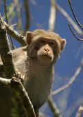 pic of tarzan  - (Wild Florida Monkey) Thank you very much for looking Silver River Florida The Boss