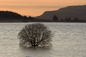 stock photo of carron  - A flooded tree at dusk in Carron Valley Reservoir in Scotland - JPG