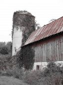 Color Accented On B & W Of Old Barn & Silo