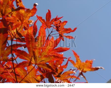 Leaves In Blue Sky 2 poster