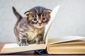 Little Striped Cute Kitten Sits On  Book. Kitten With Blue Eyes. Child Learns To Read. First Steps I poster
