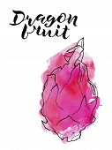 Vector Line Illustration Of Dragon Fruite With Pink Watercolor Abstract Background And Handwritten L poster