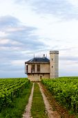 image of clos  - vineyards of Clos Blanc De Vougeot Castle - JPG