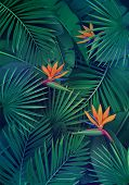 Vector Tropical Background With Leaves And Flowers. Jungle Exotic Strelitzia, Banana Leaf, Philodend poster