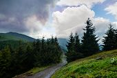 Mountain Road Through Pine Forest And Beautiful Clouds. Sky And Mountain Natural Landscape. Nature L poster