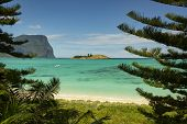 View Of Lord Howe Island Near Lovers Bay Beach Framed By Pine Trees With Pristine Turquoise And Blue poster