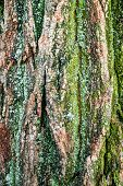 Close-up Of Tree Bark. Logs For Firewood Covered With Moss. Stack Of Firewood. Woodpile Of Chopped L poster