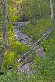 Quiet Stream Amongst The Aspen In Great Basin National Park In Nevada poster
