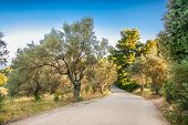 Road over Olive groves at Evia island.  Greece. Europa. poster