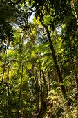 Bright Tropical Rainforest Canopy In Queensland, Australia poster