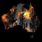 Australia Fires: The Animals Struggling In The Crisis. 480 Million Animals Are Being Directly Affect poster