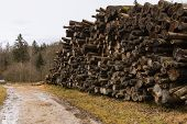 Global Ecological Disaster Deforestation Felling Of Tree On Edge Of Forest In Central Europe Region  poster