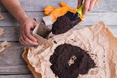 Mans Hands Sowing And Burying Seeds With Trowel To Soil In Pot. Pouring Soil In A Disposable Cardboa poster